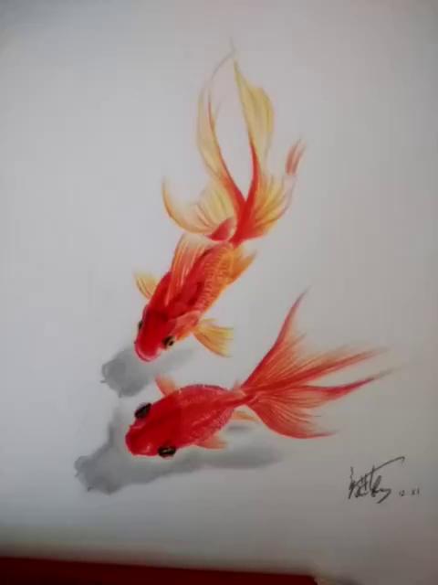 彩铅金鱼,祝年年有余