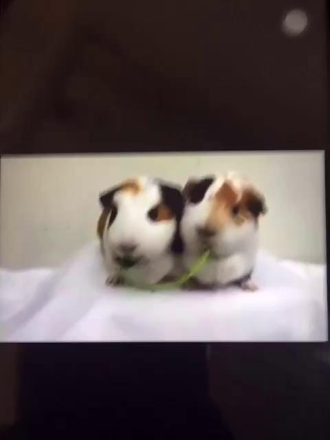 两只小老鼠啊,木嘛