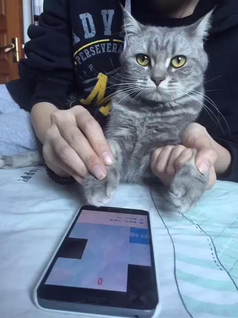 壁纸 动物 猫 猫咪 小猫 桌面 480_640 竖版 竖屏 手机