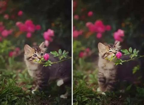 琴伴奏#森林里的小动物
